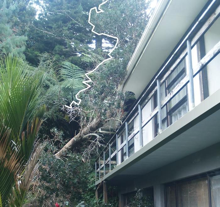 fallen-tree1_700