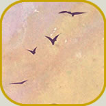 wings-of-morning-icon
