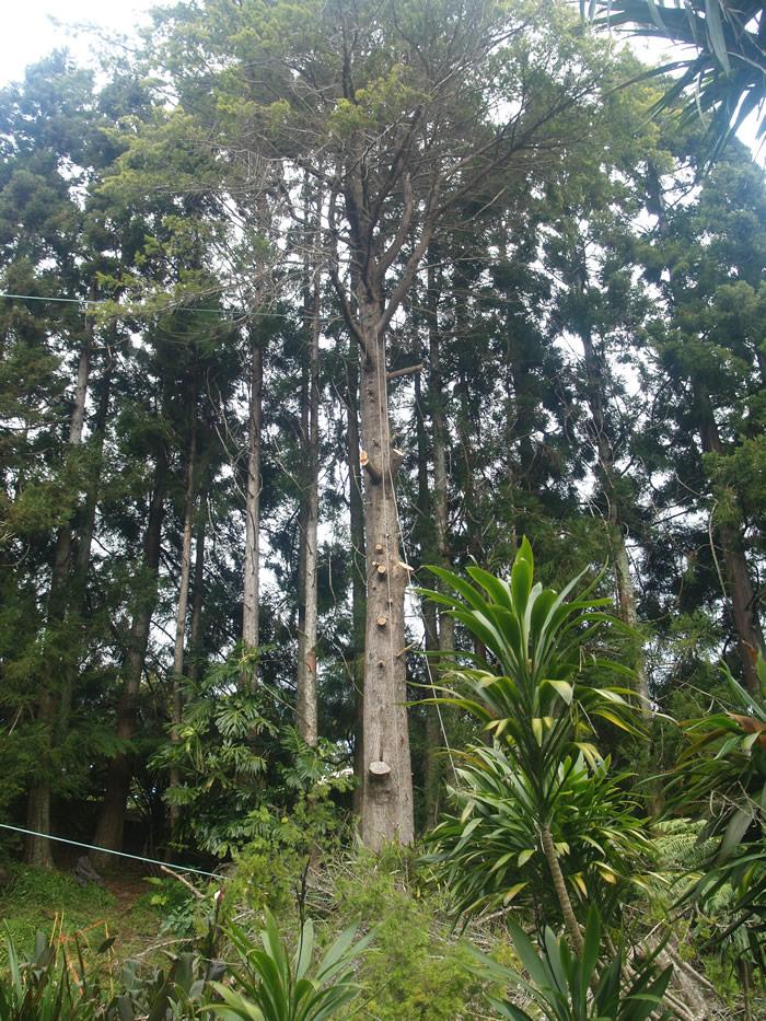 tree1-3_700